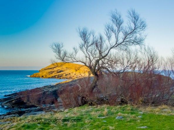 Árbol-junto-al-mar