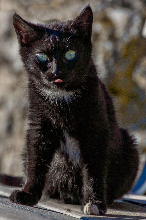 Gato-negro-web